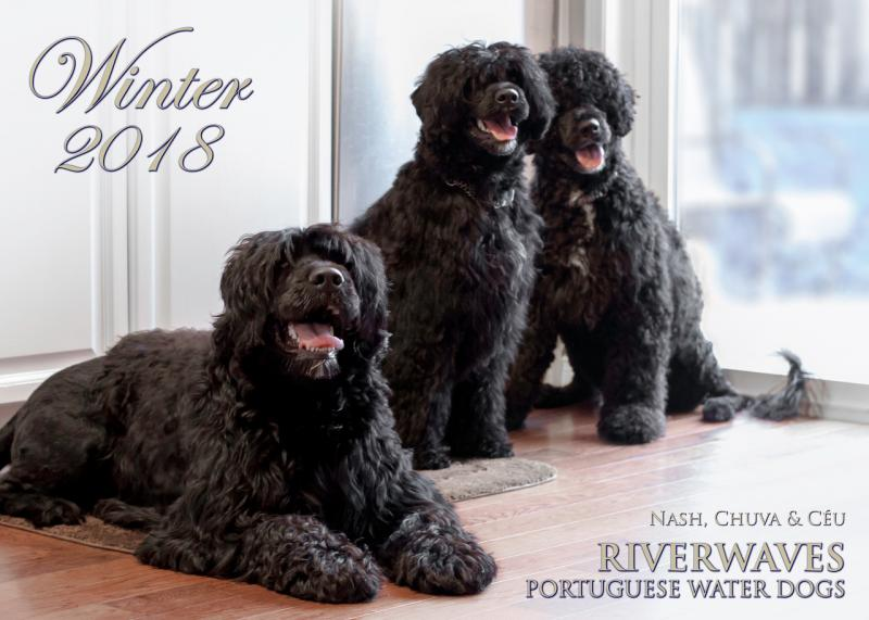 Riverwaves Portuguese Water Dogs - The Portuguese Water Dog